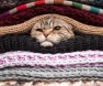 gato-e-frio