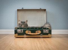 gato-en-una-maleta