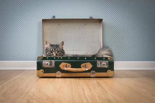 Camas recicladas para gatos