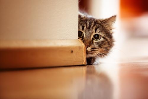 Por que os gatos não respondem?
