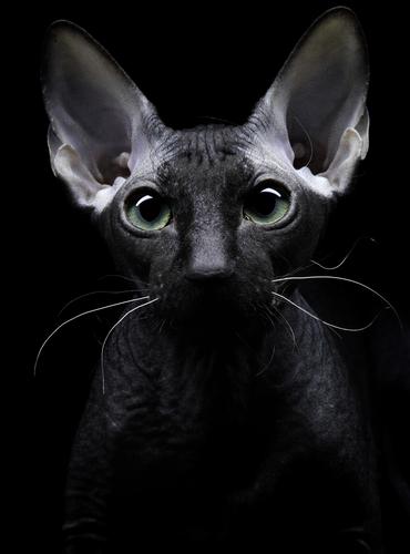 Cachorros e gatos têm sexto sentido?
