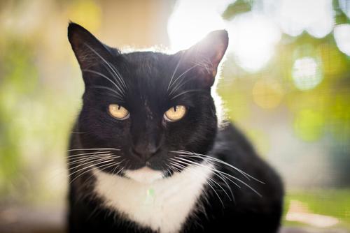 gato-olhos