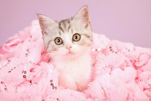 Gato morre intoxicado depois de ser tingido de rosa por sua dona