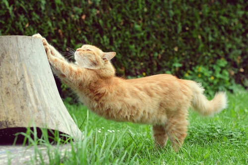 Contamos pra você como os gatos marcam o seu território