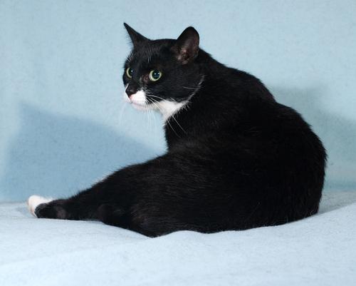 A historia dos gatos pretos