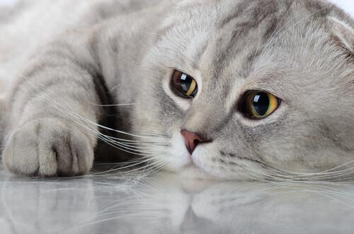 Conheça o horóscopo dos gatos
