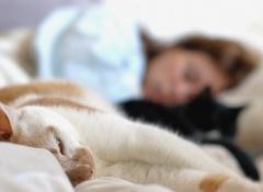 gatos-dormindo