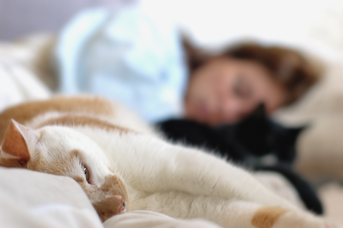 Meu animal de estimação perturba meu sono