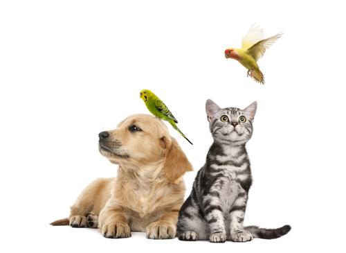 Cães e Gatos versus Pássaros