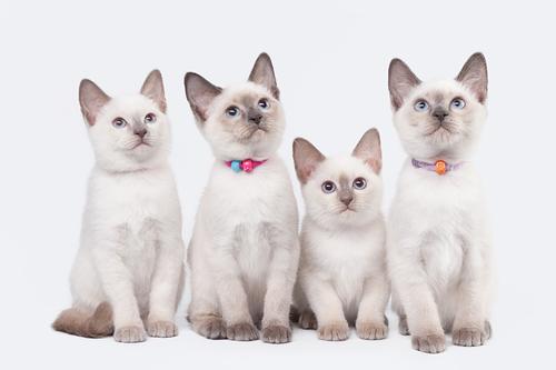 Tipos de areia para gatos: aprenda a escolher a mais adequada
