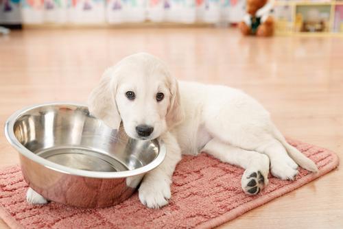 5 razões para dar comida a seu animal em vasilhas de metal