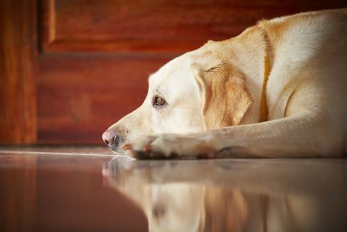 6 soluções para sanar a ansiedade dos cães quando eles ficam sozinhos