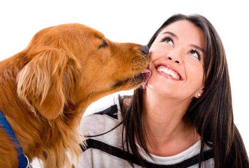 A relação entre os cães e os humanos