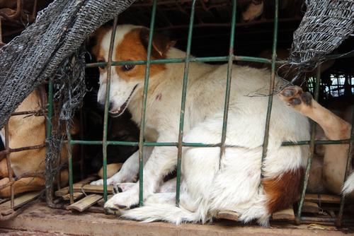 Maus tratos aos animais, sintoma de doença mental
