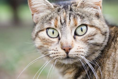O olhar dos gatos