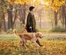 passeio-cachorro