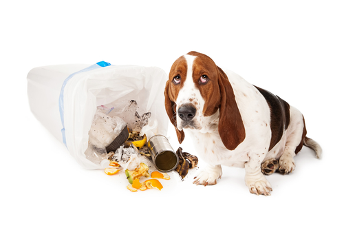 Veja porque seu cão adora fuçar o lixo