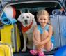 perro-viaja-coche