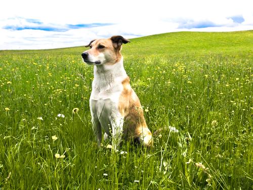 As seis bases da psicologia canina: compreender e controlar os maus hábitos do seu cachorro