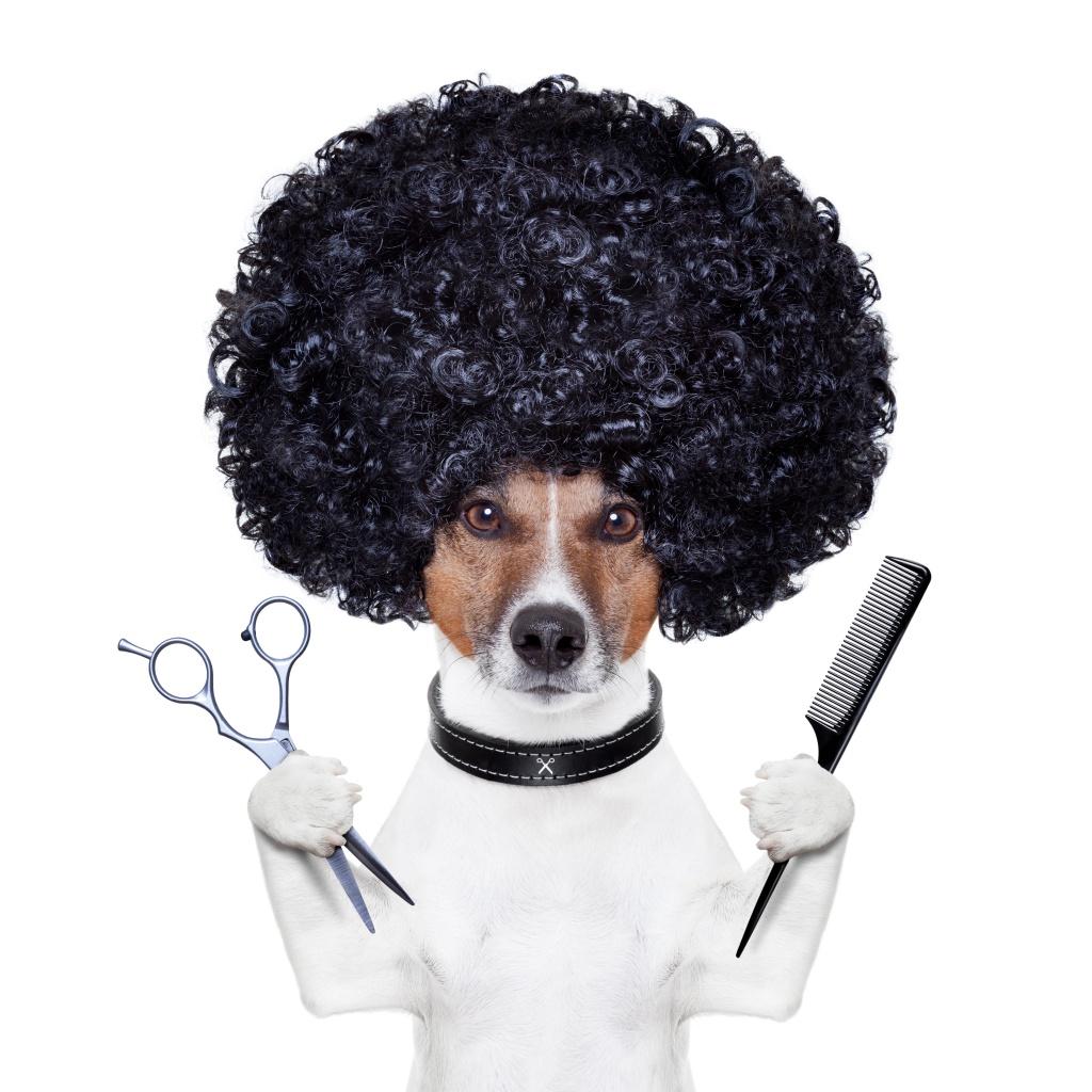 Vai levar o seu animal ao salão para pets e está com dúvidas? Aqui nós podemos resolvê-las!