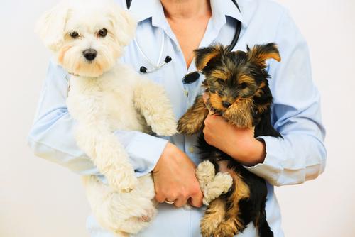 Animais e veterinário