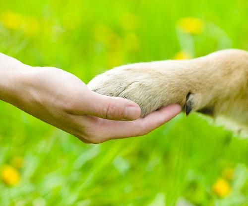 Como cortar os esporões nos cachorros