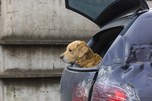 Viajar de carro com animal de estimação