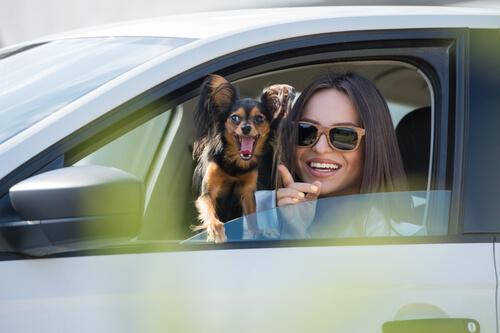 Como evitar o enjoo do animal dentro do carro