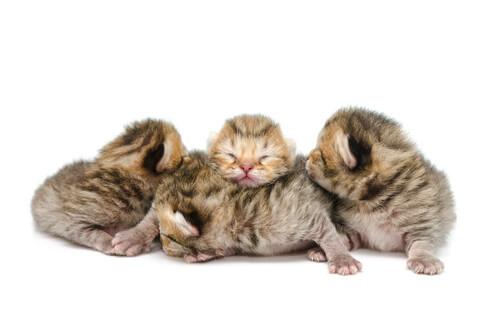 Gatos recém-nascidos