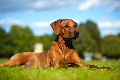 Suplementos para ajudar o seu cão com a dor da artrite