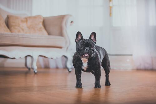 O que é preciso analisar antes de adotar um cachorro