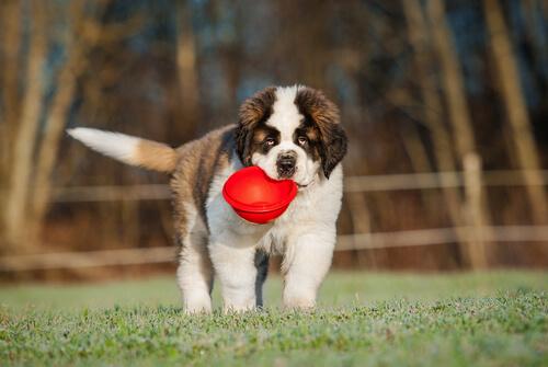 A importância da dieta no desenvolvimento do filhote de cachorro