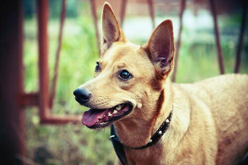 Desvantagens da amputação, para fins estéticos, em animais de estimação