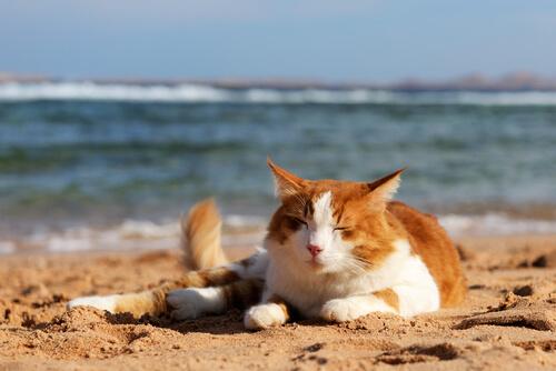 Como se manifesta a independência dos gatos