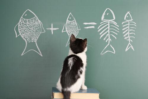Características da psicologia e da inteligência felina