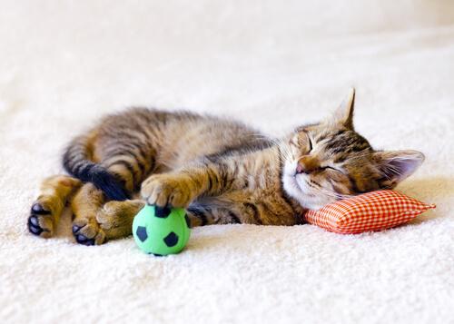 Como fazer os melhores brinquedos para gatos