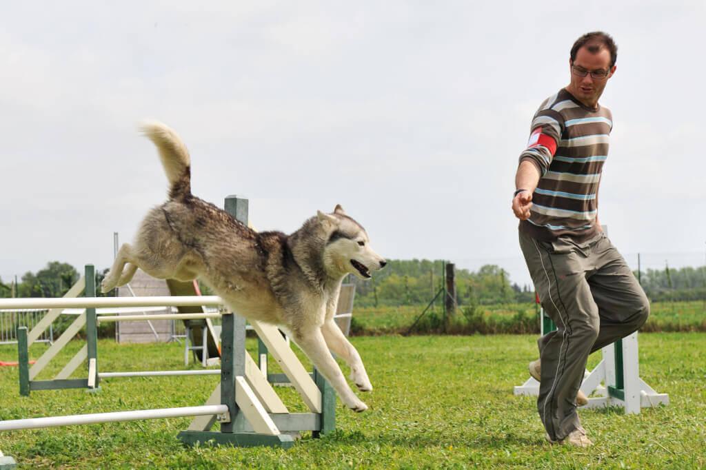 Como adestrar seu cão