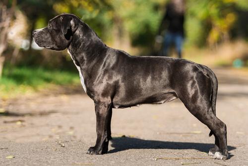 Fisiologia Canina