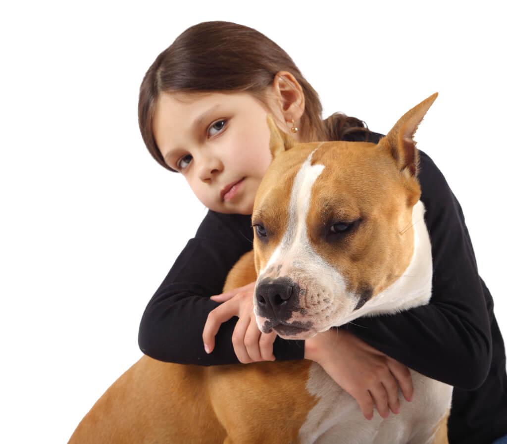 Ter um American Pitbull Terrier em família