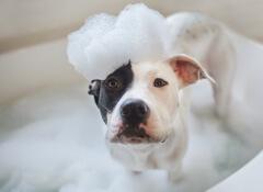 banho-cães