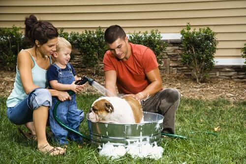 Dando banho nos cães