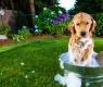 banho-em-cachorro