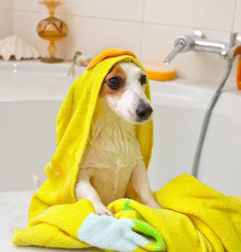 Dando banho em um cachorro