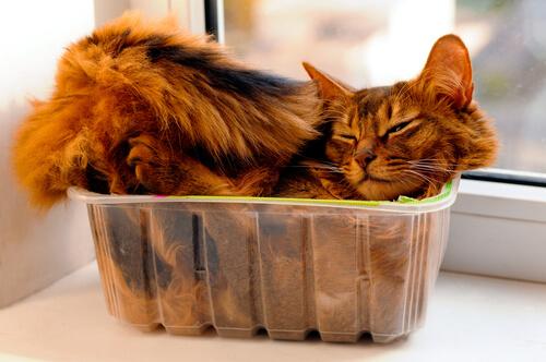 Gatos e caixas