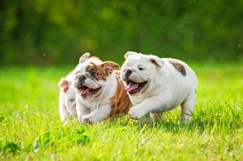 O que é a Leptospirose em cães?
