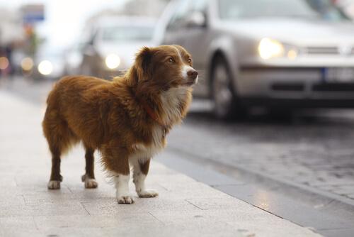 Como resgatar cães abandonados
