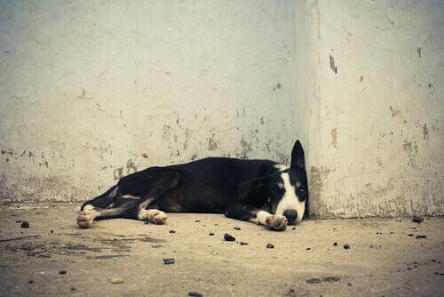 Cães abandonados
