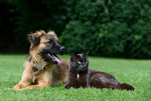Cães ou gatos? Personalidades distintas
