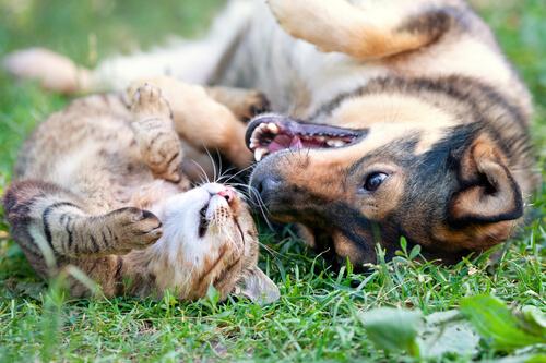 Cães e gatos engraçados
