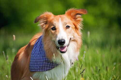 Prevenção: como cuidar de seu cachorro corretamente